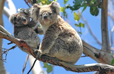 Feribot Tasmania